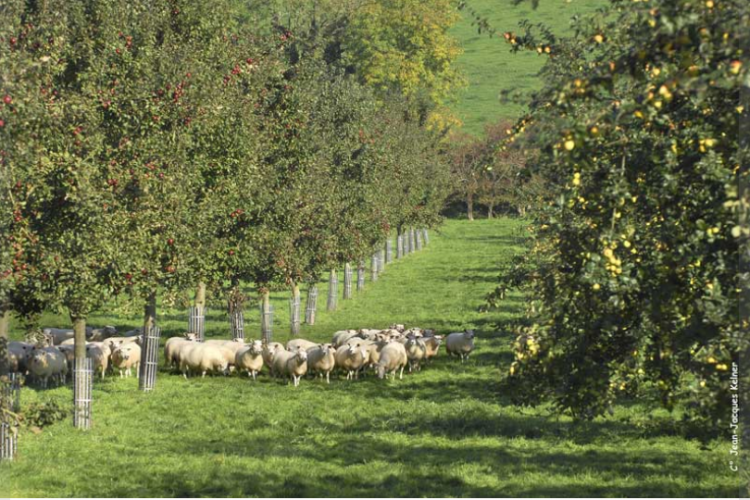 <b>L'ASSOCIATION FRANCAISE D'AGROFORESTERIE, l'innovation avec les arbres</b>