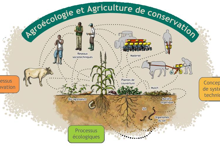 <b>BASE et l'agriculture de conservation</b>