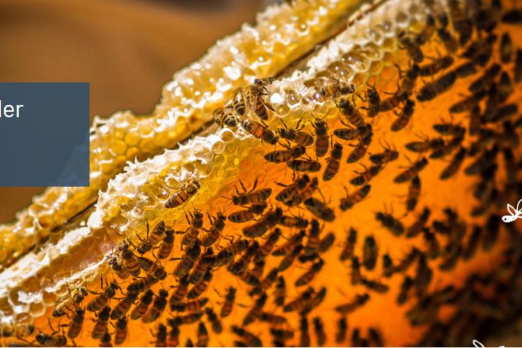 <b>BLEU BLANC RUCHE, pour des miels de repeuplement</b>