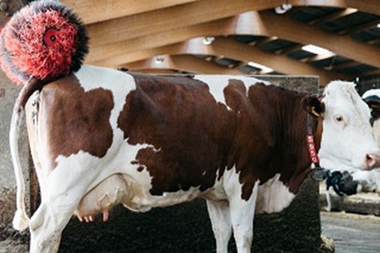 <b>BOVIWELL, le bien-être des bovins d'élevage</b>