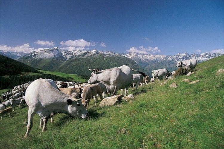 <b>MAISON LACUBE : L'agrotourisme au service d'une agriculture responsable</b>