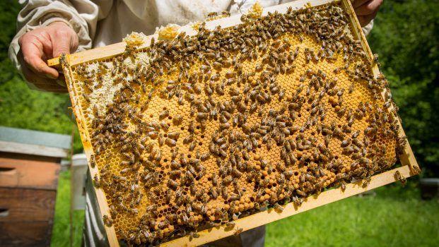 <b>FAMILLE MICHAUD Qualité miel producteur</b>