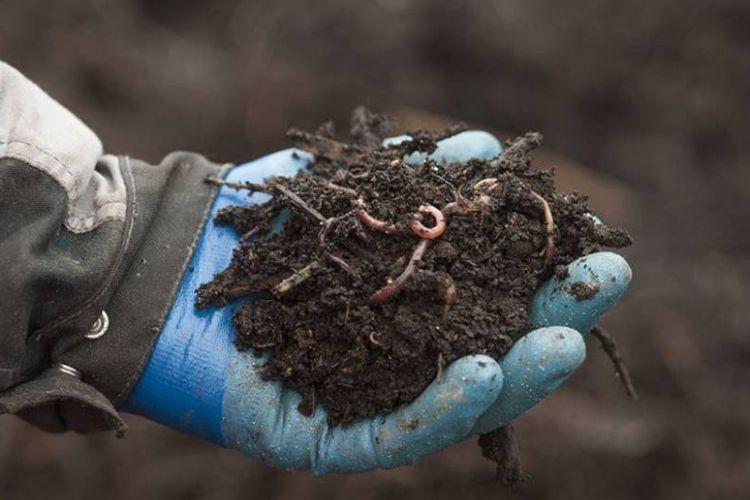 <b>MOULINOT, Créateur de compost haute couture à partir de déchets alimentaires</b>
