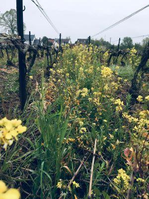Parmantier Frère et Sœur : Plus qu'un vignoble, un écosystème durable !