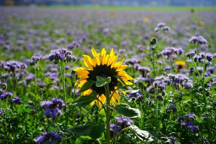<b>REV3, des sols vivants pour les agriculteurs et la société</b>