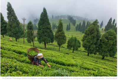 <b>SIKKIM en Inde, pour une agriculture 100 % biologique</b>