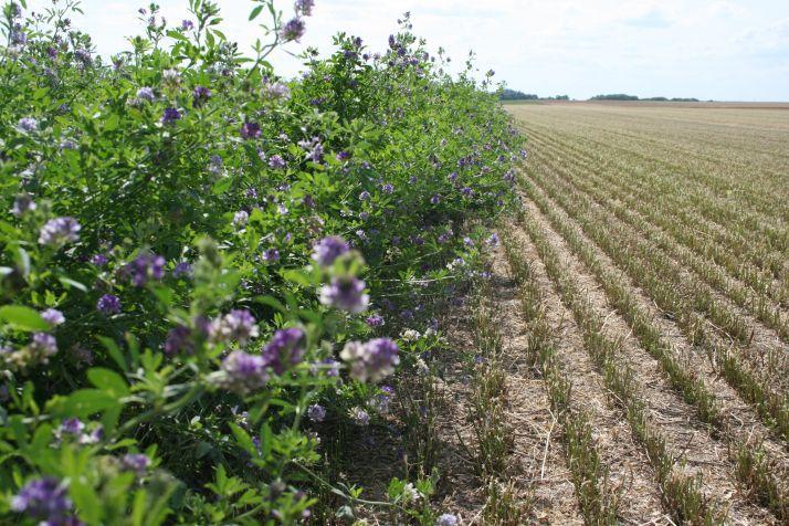 <b>Les agriculteurs, acteurs de la biodiversité avec SYMBIOSE</b>