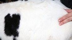 <b>GAEC VAUDRON, pour le bien-être animal via l'acupuncture</b>