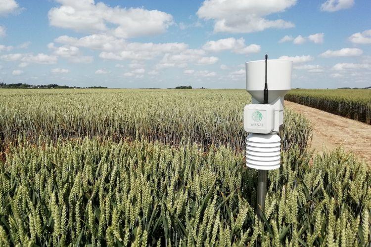 <b>WEENAT, des capteurs connectés optimisant les pratiques agricoles</b>