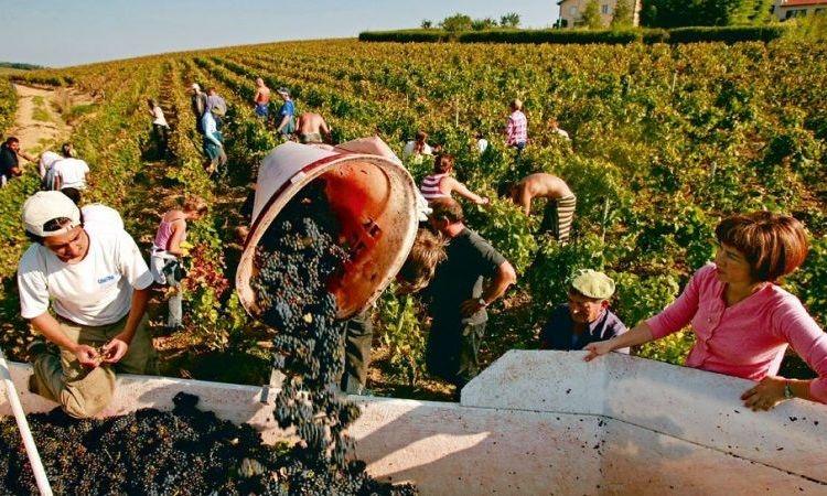 Faciliter la vie des agriculteurs et viticulteurs avec WIZIFARM!